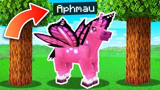 Playing Minecraft As A SECRET Pegasus!