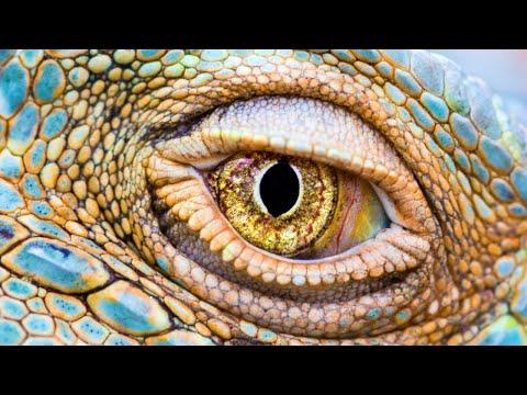 ►Misterios de la Evolución | Los Ojos | Documentales Interesantes- Documental de animales HD from YouTube · Duration:  21 minutes 42 seconds