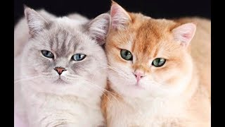 Cats and Kittens Galore. Enjoy Funny Cute Cats and Kittens Meowing Playing Videos #31