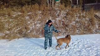 Обученная собака Иркутск