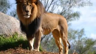 Топ 10 самых сильных хищников планеты