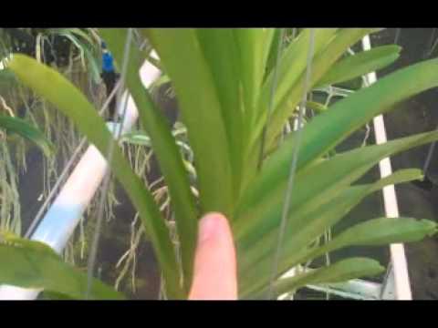JFTV Replays: Technology at the Holland Vanda Farms