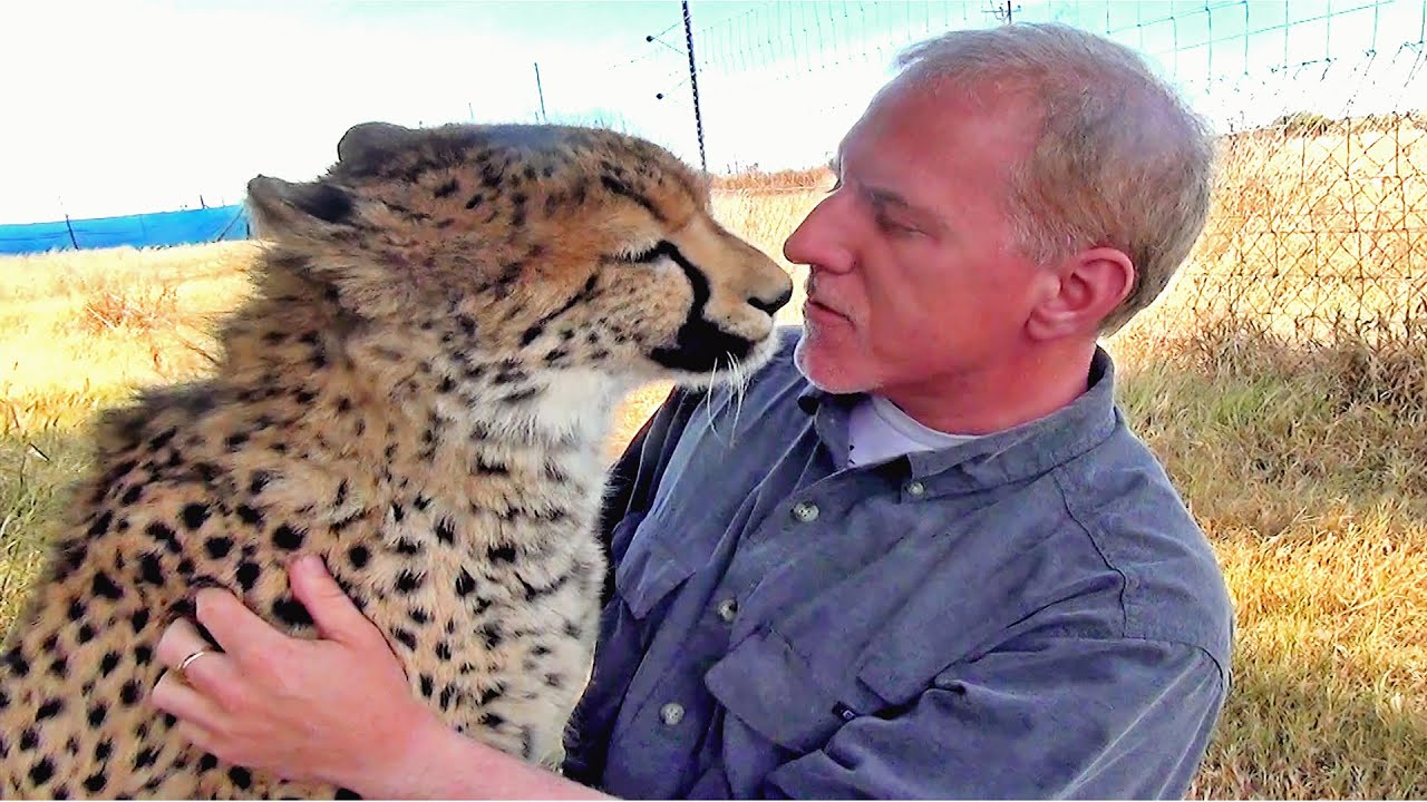 Cute Cat With Good Morning Wallpaper Man Reunites With African Cheetah Big Cat After 1 Year
