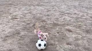 2018.9-さくらのサッカー! thumbnail