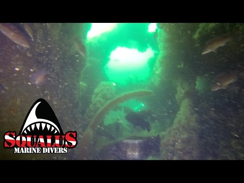 THE WRECK OF THE HORATIO HALL - CAPE COD SQUALUS MARINE DIVERS