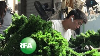 In China, It's Crunch Time in 'Santa's Workshop' | Radio Free Asia (RFA)