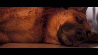 Самый грустный момент из фильма Я - легенда