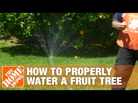 How To Properly Water a Fruit Tree - The Home Depot