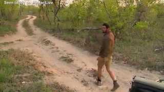 Sept 29, 2015 - WildEarth Safari  AM drive (Scott's close encounter of the lion kind)
