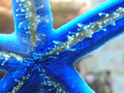 Blue Sea Star Tutorial