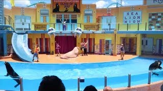 Complete Sea Lion High Show from Sea World Orlando 2017