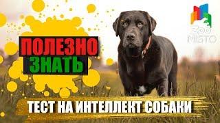 Полезно знать с ZooMISTO | Тест на уровень интеллекта собаки