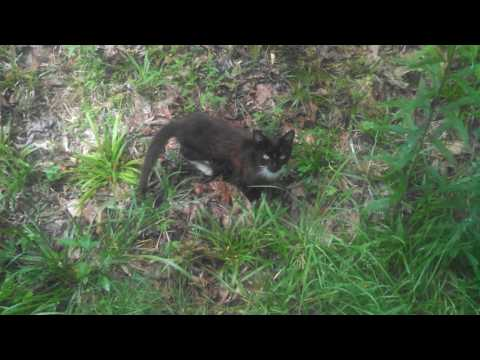 Cat Documentary Episode 2:Kittens in the wild.