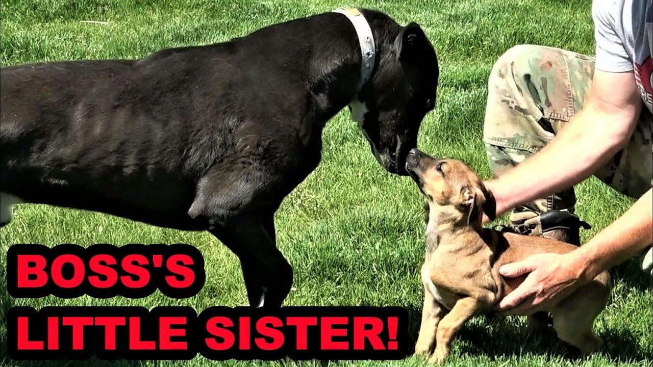 Raptor Update and Boss's Little Sister!
