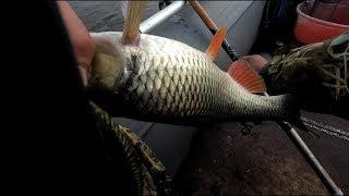 Вот это рыбалка.Они гнули удочку и разгибали крючки.Р.Ока 2018г