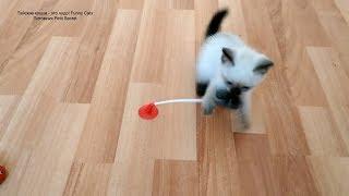 Как тайские котята, возрастом 1,5 месяца, играли мышкой игрушечной на присоске! Тайские кошки   это