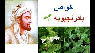 گیاهی با هزار و یک خاصیت و گیاه محبوب ابوعلی  سینا
