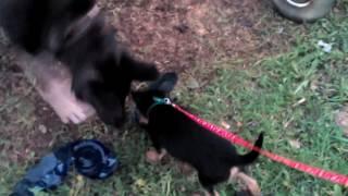 Мои собаки (Размер не имеет значение)