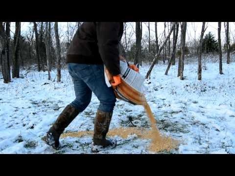 Don't Feed Deer in Winter