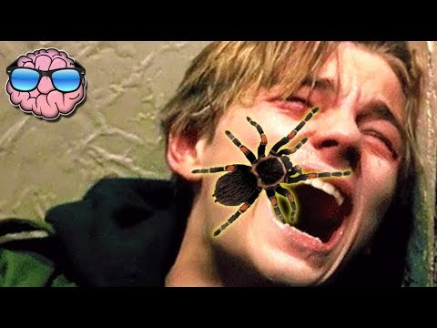 Top 10 MOST DANGEROUS Spiders In The WORLD!