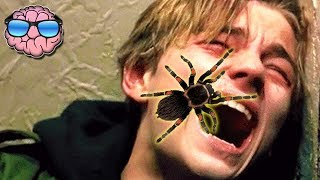 Top 10 Most DEADLY Spiders In The WORLD!
