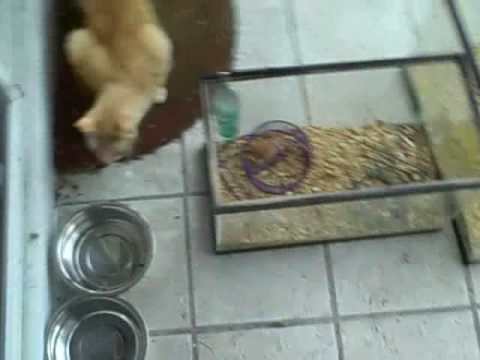Cat and Mouse Games , Live Feeder mice fed to our Outdoor Cat Maynord.