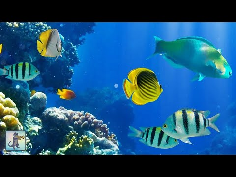 2 Hours of Beautiful Coral Reef Fish, Relaxing Ocean Fish, &