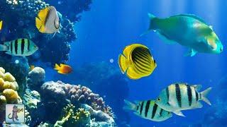 2 Hours Of Beautiful Coral Reef Fish, Relaxing Ocean Fish, & Stunning Aquarium Relax Music 1080p Hd