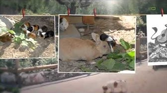 Tierferienheim, Tierheim, Tierpension, Hundebetreuung, Hundesitter, Hunde, Lyss, Biel, Bern, Schweiz