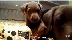 Die niedlichsten Tierbabys des Jahres! Erste Bilder aus den neuen Folgen