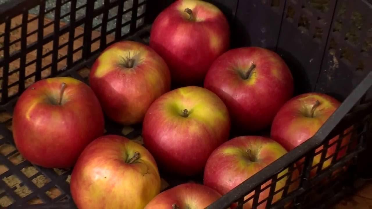 Zöldségek és gyümölcsök a prosztatitis kezelésében