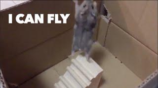 The hamster's challenge