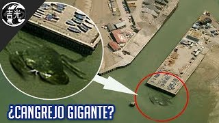 5 Criaturas extrañas captadas en Google Maps Free HD Video