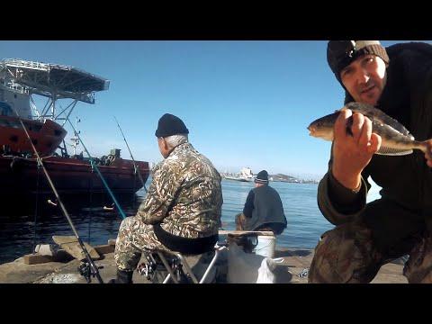 Городской Окунь СЛОМАЛ СПИННИНГ! Рыбалка на ОСТРОВЕ Русский под мостом.