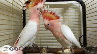 Парк птиц Воробьи, часть 3. Птенцы!