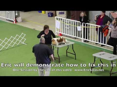 Training a show dog to Stand without moving by Eric Salas Workshops