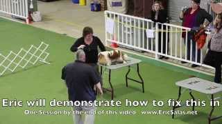 Training A Show Dog To Stand Without Moving