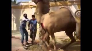 жесть, ржака, секс, яга, сиги, верблюд, арабы