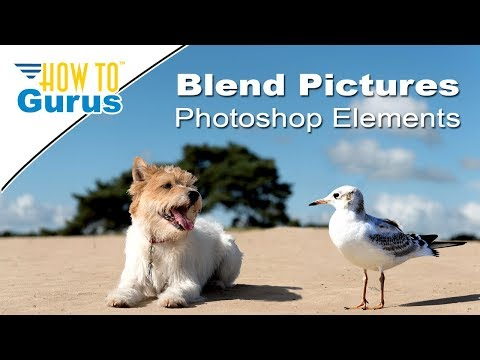 Photoshop Elements Blending Pictures : How to Combine Animals in Photo 2018 15 14 13 12 11 Tutorial
