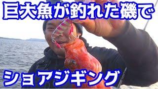 巨大クエが釣れた磯でショアジギングに挑戦!!