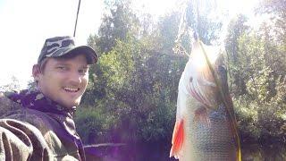 Рыбалка на Пинеге 2016