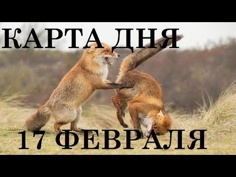 КАРТА ДНЯ 17 ФЕВРАЛЯ ТАРО ГОРОСКОП