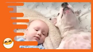 Download Naughty Dogs and Babies are the Best Friends - Best Baby Videos Mp3 and Videos