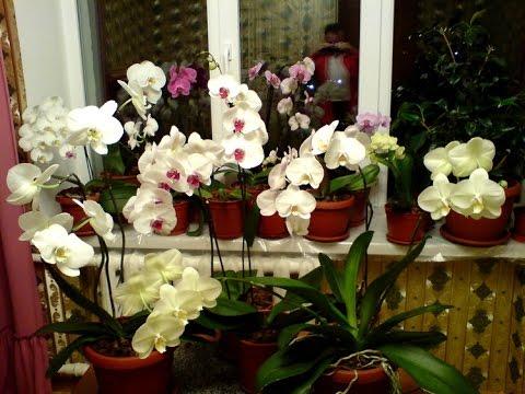 Орхидеи сергей никончук