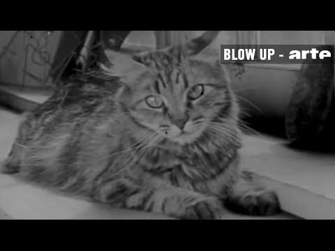"Vous connaissez ""The Private Life of a Cat"" ? - Blow Up - ARTE"