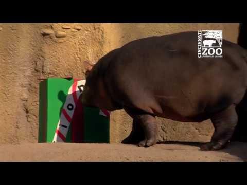 Santa brings Gifts to Animals - Cincinnati Zoo