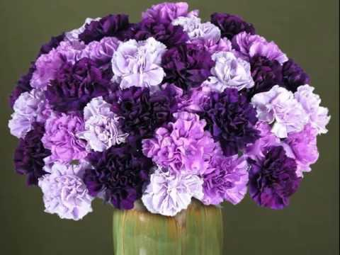 Purple And White Carnation Bouquet Flower Picture Collection You