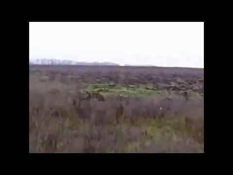 Охота- Видео. Смотреть онлайн видео об охоте охотничий