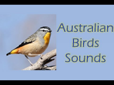 Australian Birds Sounds For Pc - Download For Windows 7,10 and Mac