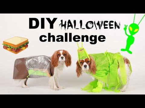 DIY HALLOWEEN DOG COSTUME CHALLENGE! Easy Last Minute Costumes
